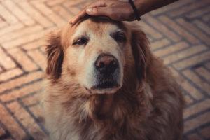 ¿Cómo cuidar y alimentar a una mascota geriátrica?