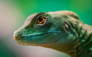 Crisis climática adelantará el envejecimiento en animales, revela estudio