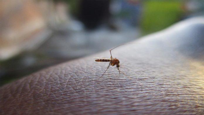 Dengue podría generar inmunidad contra COVID-19: estudio