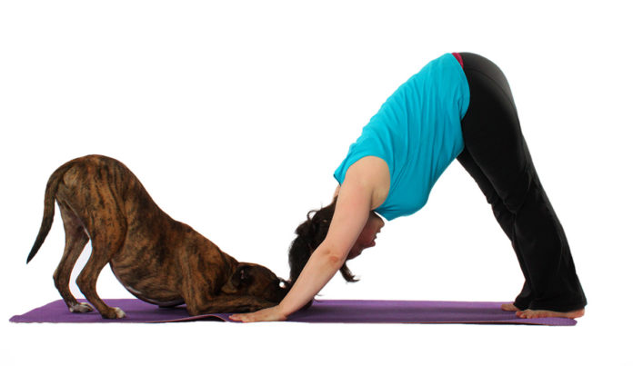 Doga Yoga estiramientos perro