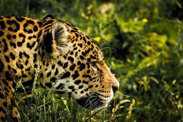 Extinción especies invasión humana