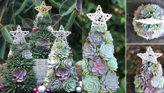 ¡Nueva tendencia navideña! suculentas como arbolitos de navidad