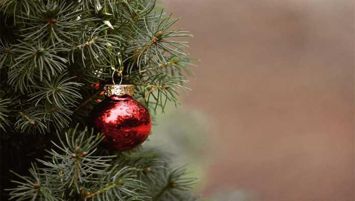 ¿Árbol navideño artificial o natural? La mejor elección para el medio ambiente
