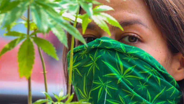 4 puntos clave sobre la despenalización de la marihuana en México