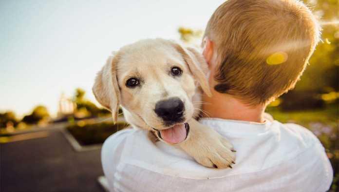 Perros no sienten amor por sus dueños: estudio
