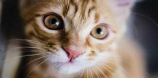 Estos son los animales más susceptibles al COVID-19, según un estudio