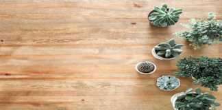 Plantas que pueden servir para renovar tu casa en 2021
