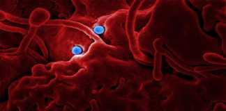 Bacterias que podrían generar oxígeno en Marte