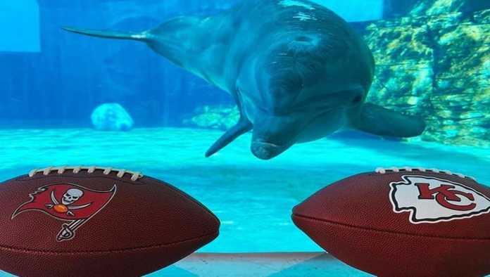 Nicholas el delfín