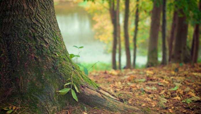 ¿Sabías que el 70% de los brotes epidémicos tienen su origen en la deforestación?