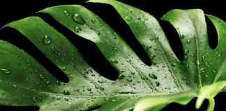 Plantas tóxicas que tienes en casa