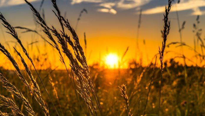 Producción de vitamina D, uno de los beneficios de la luz del sol en tu cuerpo
