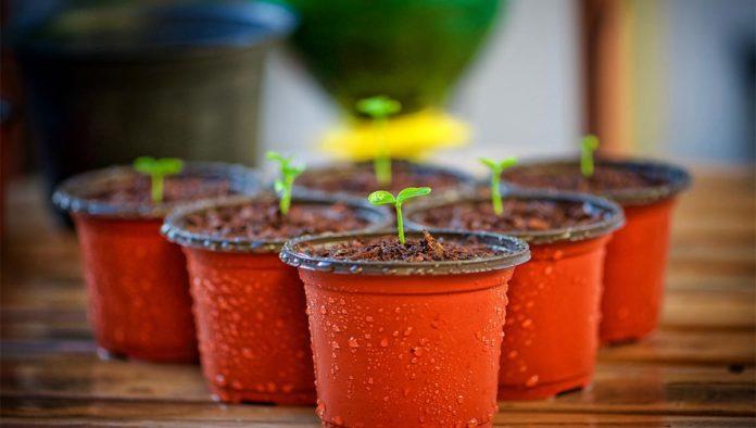 Macetas para plantar verduras