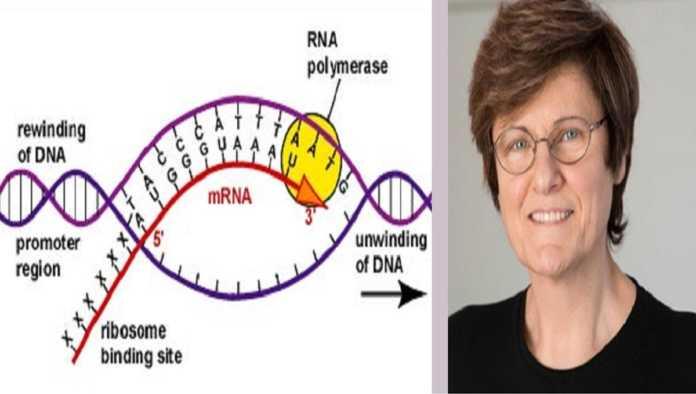 Creadora de la vacuna de mRNA, Katalin Karikó