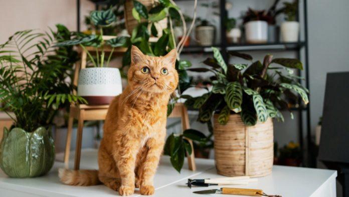 Plantas que son seguras para tu gato y sí puedes tener en casa