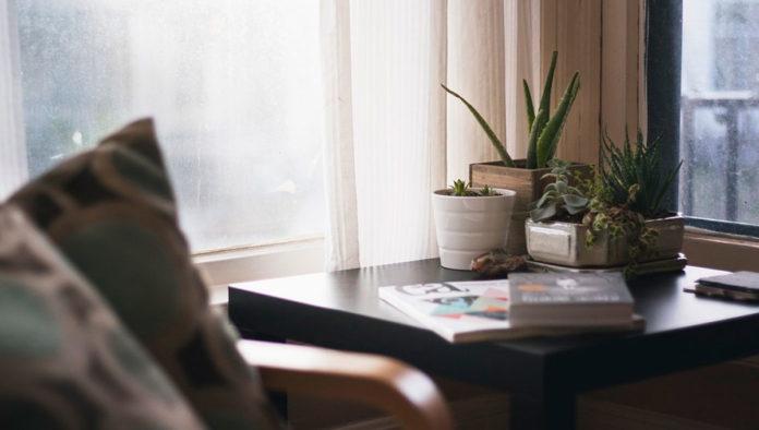 ¿Qué plantas son mejores para el interior de tu hogar?