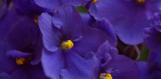 Plantas con flores para el interior de tu casa
