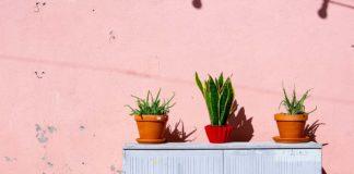 Alóe vera una de las plantas que absorben calor