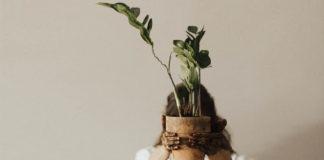 Una maceta con una planta transplantada