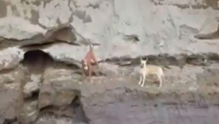 Piden en redes rescate de perros atrapados en el socavón de Puebla