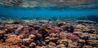 Los arrecifes más bellos del mundo