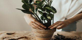 Trasplantar una planta