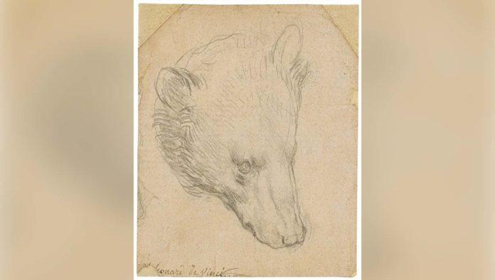 Cabeza de oso de Da Vinci