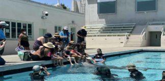 Delfines robot de PETA