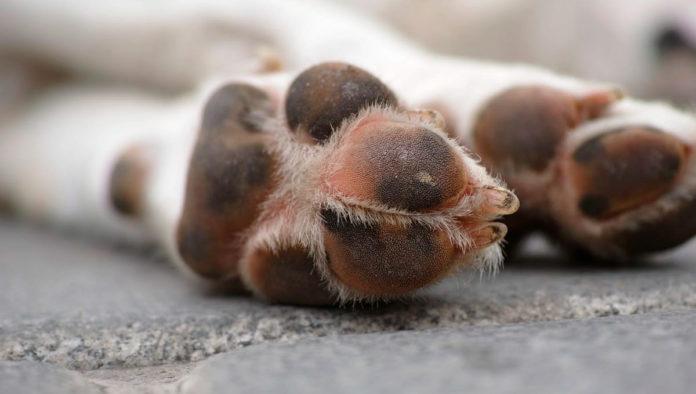 ¿Dónde denunciar maltrato animal en CDMX y Edomex?