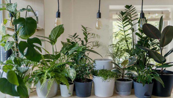 Plantas de Feng Shui