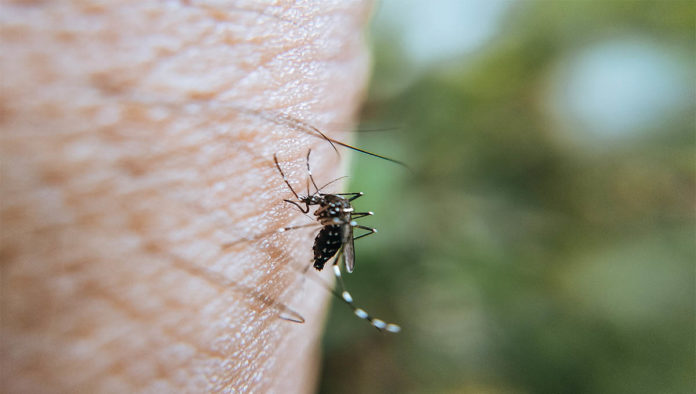 Picadura de mosquito