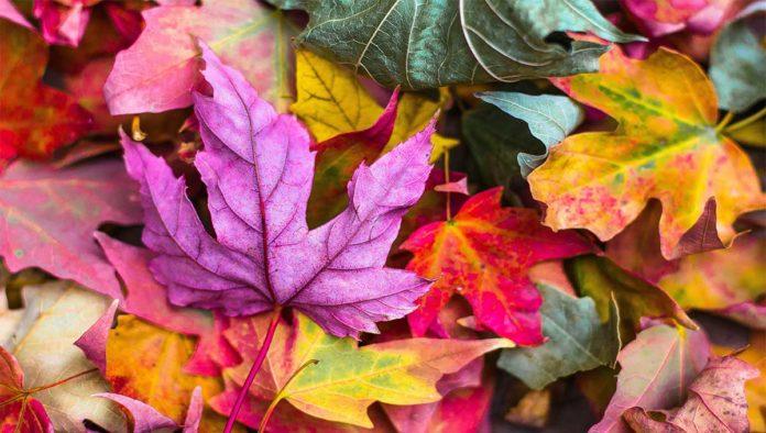 Hojas que caen en otoño