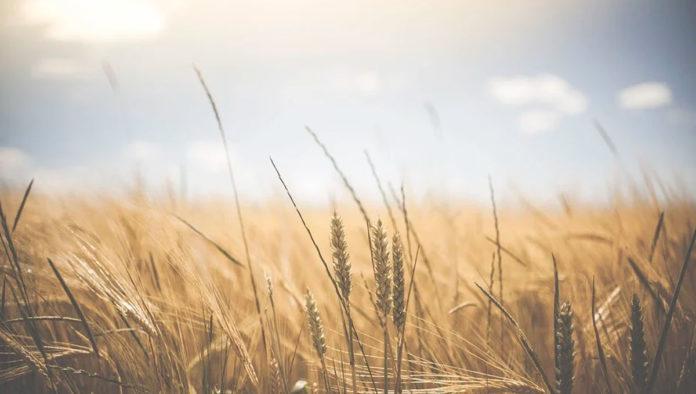 Herramientas tecnológicas pueden colaborar a evitar crisis alimentarias, señala FAO
