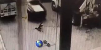 Video de perro Husky