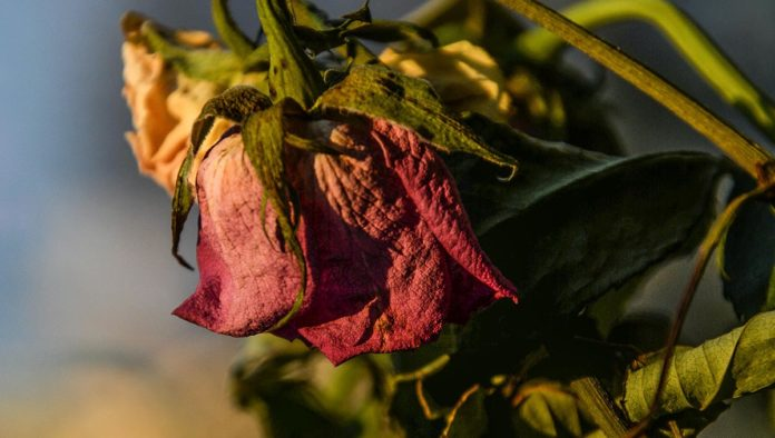 Flor muerta